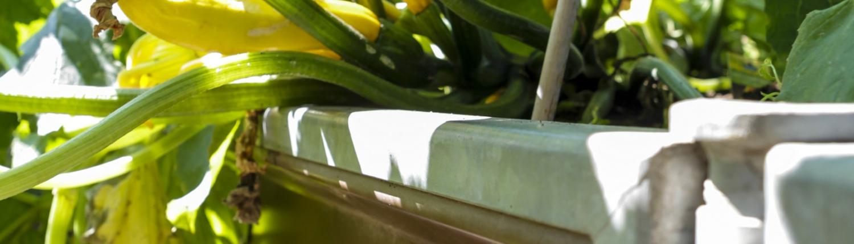 smartbeet® - Das Hochbeet aus Metall - Bepflanzung mit Zucchini